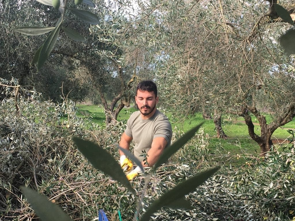 business-europe-production-mounting-concerns-in-greece-as-harvest-nears-olive-oil-times