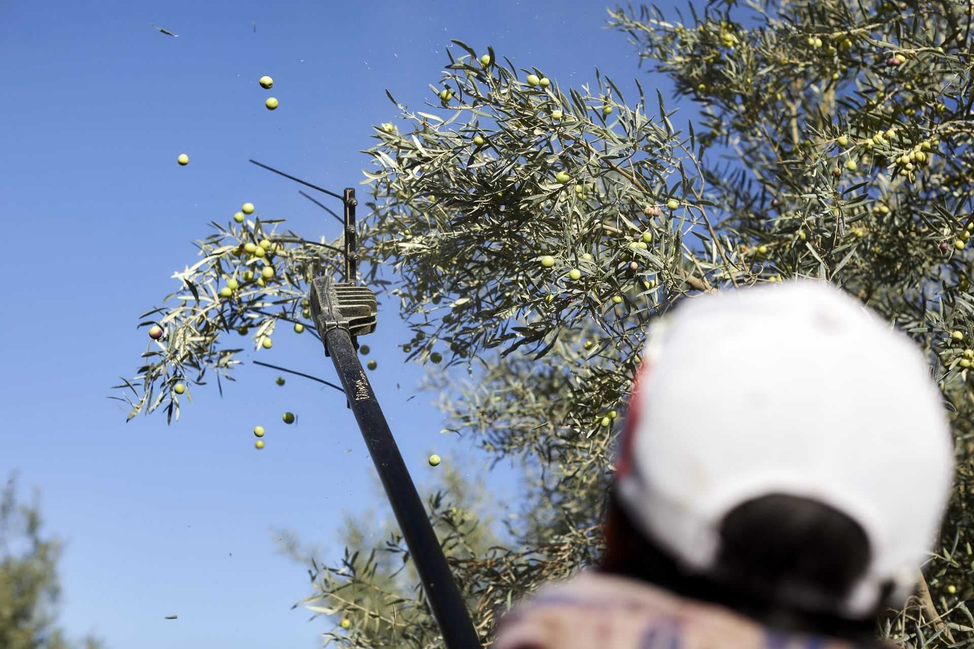 europe-competitions-profiles-the-best-olive-oils-world-portuguese-producers-continue-to-demonstrate-quality-at-world-competition-olive-oil-times