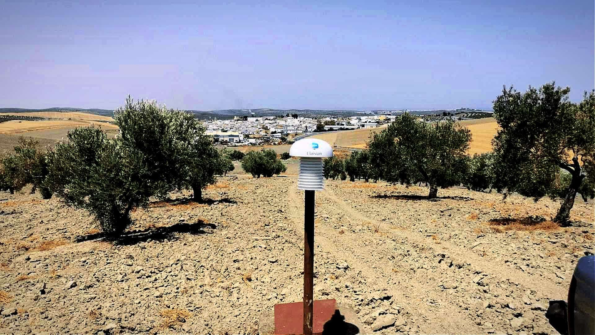 briefs-production-puglia-invests-in-early-detection-of-olive-tree-diseases-and-pests-olive-oil-times