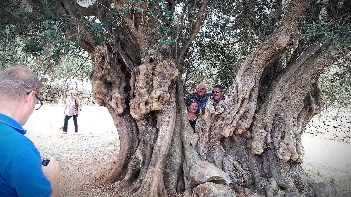 profiles-production-awardwinning-producer-seeks-to-craft-evoo-from-millenary-trees-in-croatia-olive-oil-times