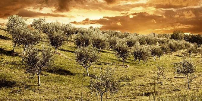 europe-spain-produces-8700-tons-in-first-month-of-new-olive-oil-season-olive-oil-times-spain-produces-8700-tons-in-first-month-of-new-olive-oil-season