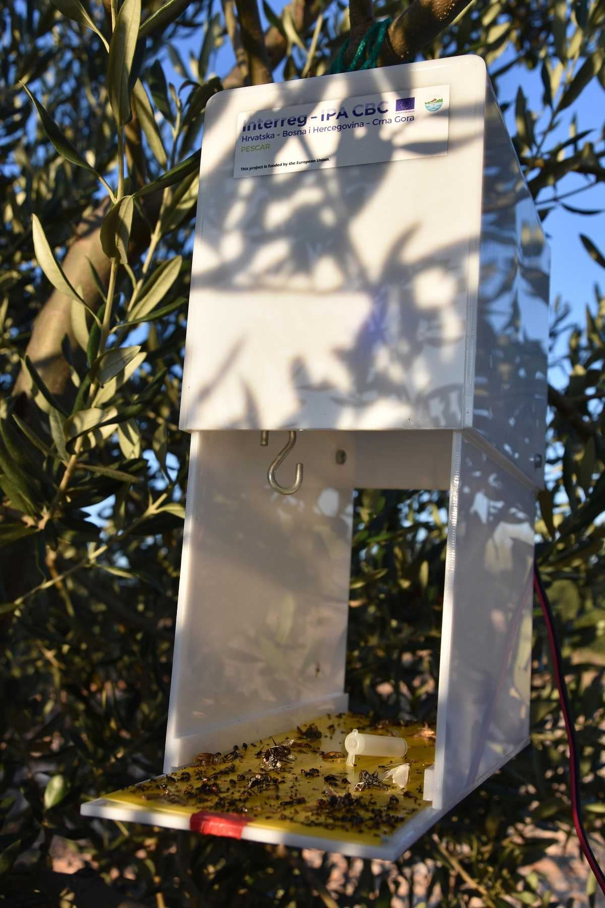 profiles-production-tragedy-inspires-one-croatian-family-to-grow-olives-olive-oil-times