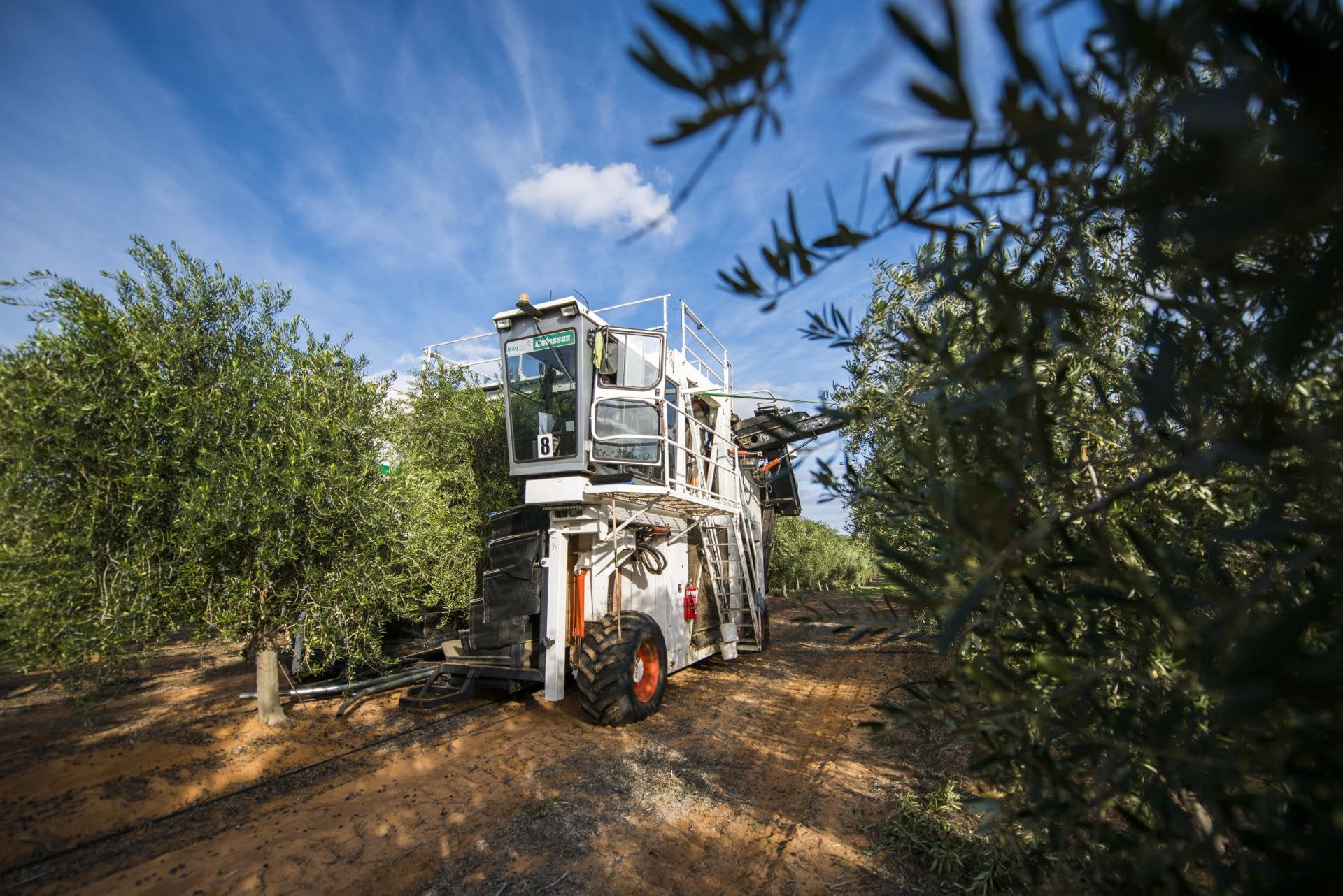australia-and-new-zealand-business-production-after-years-of-drought-and-covid-australians-celebrate-recordbreaking-harvest-olive-oil-times