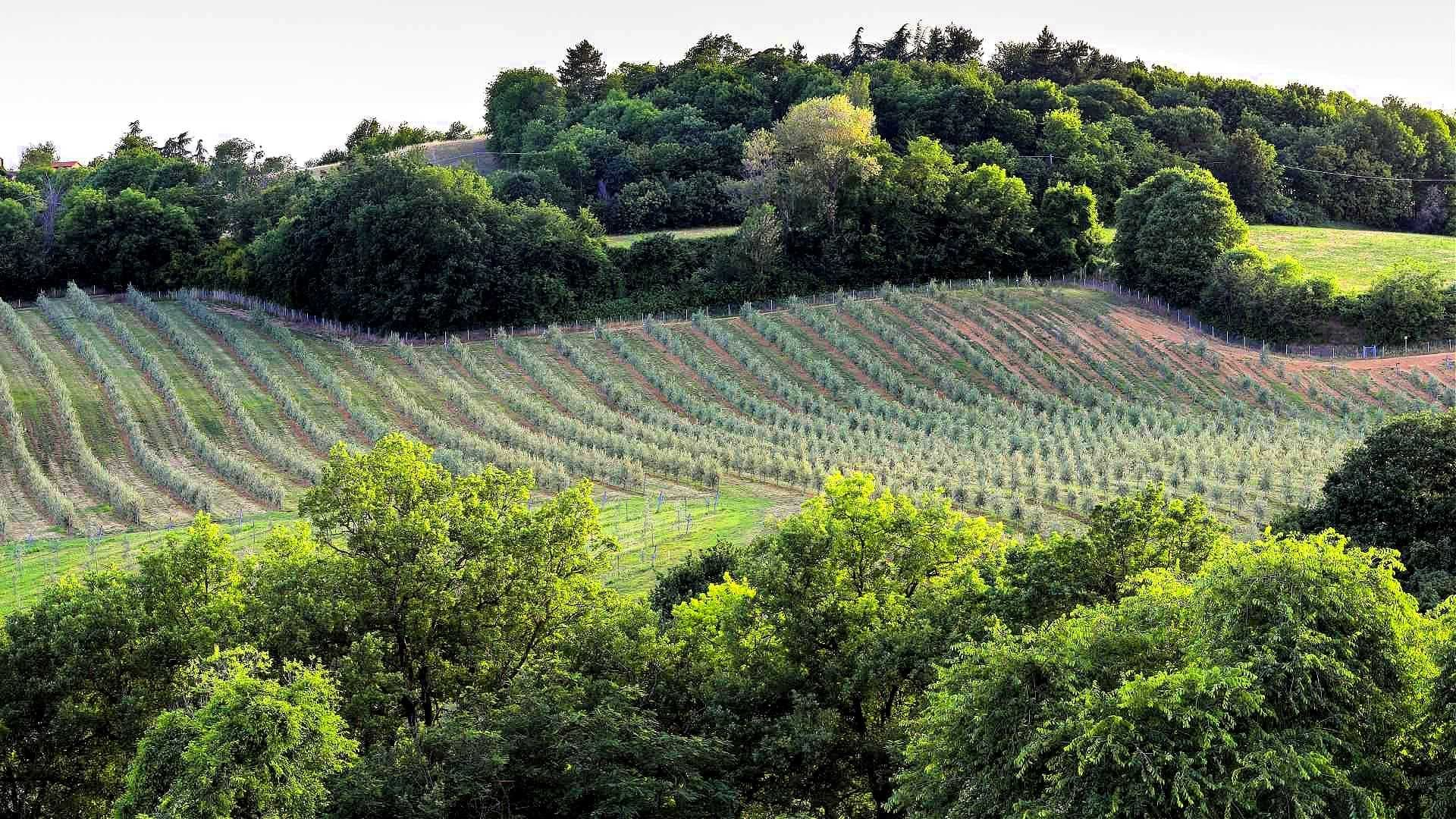 europe-competitions-production-the-best-olive-oils-northern-italian-producers-share-secrets-of-success-at-world-olive-oil-competition-olive-oil-times
