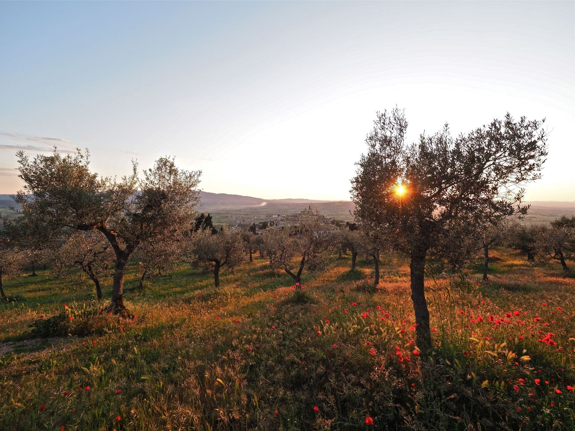 europe-competitions-production-the-best-olive-oils-awardwinning-producers-in-central-italy-prepare-for-harvest-olive-oil-times