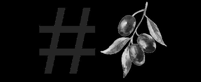 production-world-olive-harvest-gets-social-in-italy-olive-oil-times-olive-harvest-goes-social