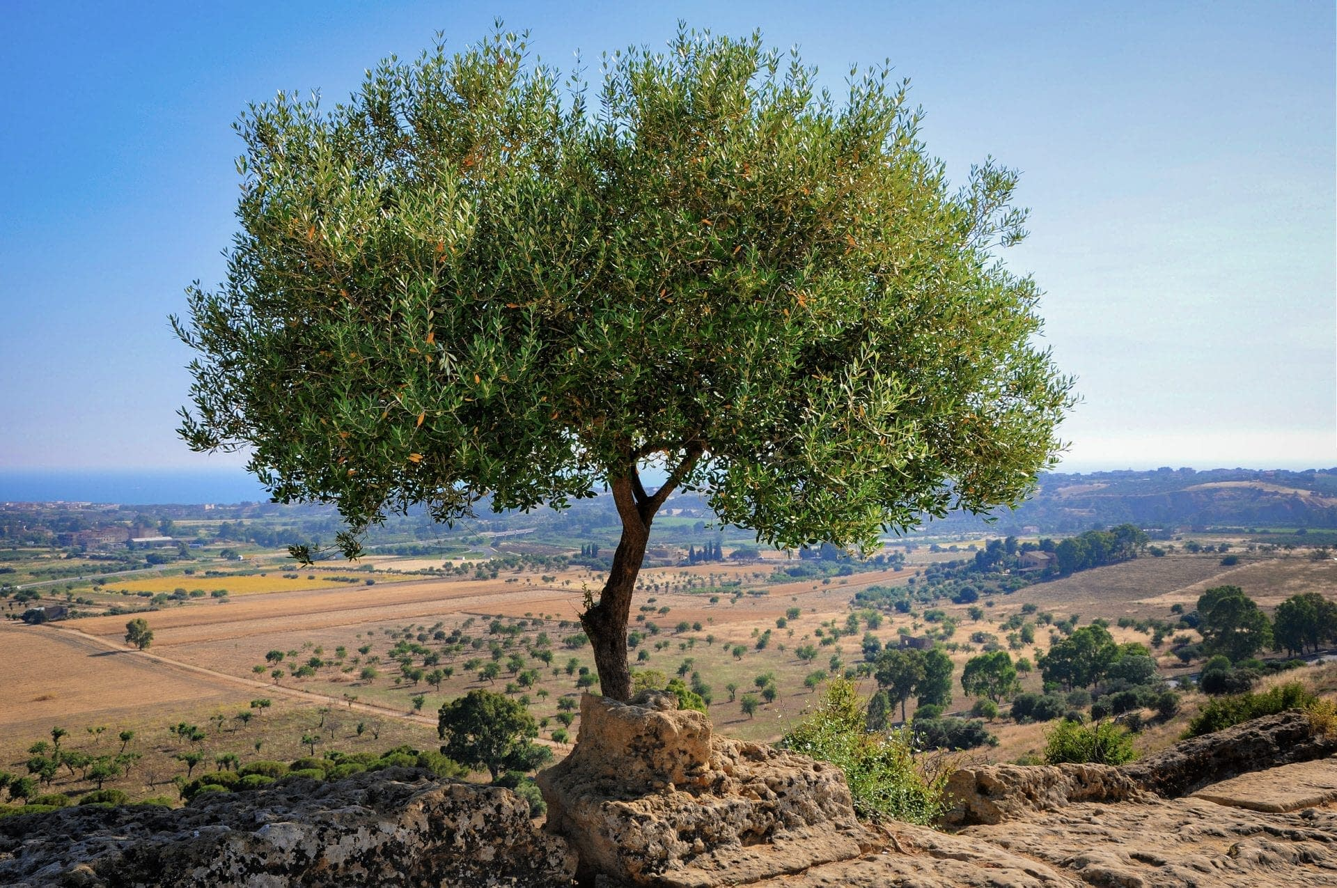production-world-challenges-await-growers-as-mediterranean-basin-becomes-hotter-and-drier-olive-oil-times