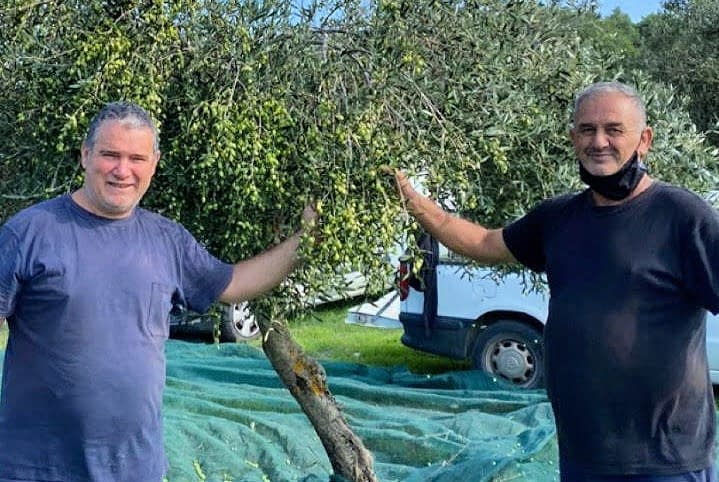 business-europe-production-producers-in-greece-adapt-to-challenging-harvest-olive-oil-times