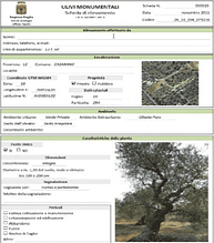 world-mapping-puglias-ancient-olives-olive-oil-times-puglia-monumental-olive--database-entry