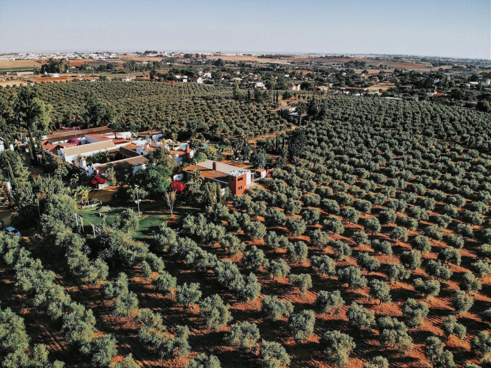 business-production-world-climate-and-covid-worry-farmers-preparing-for-harvest-olive-oil-times