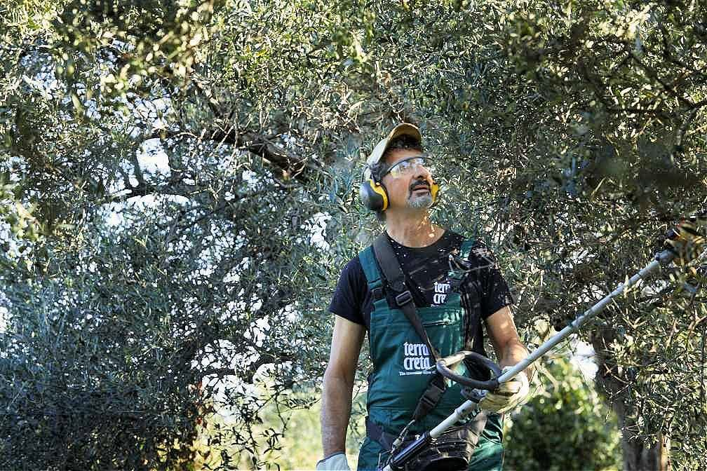 europe-competitions-the-best-olive-oils-in-record-haul-99-greek-brands-awarded-at-world-olive-oil-competition-olive-oil-times