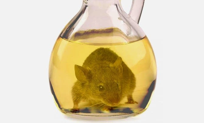 world-mouse-in-olive-oil-cruet-spurs-new-push-for-ban-olive-oil-times-mouse-in-olive-oil-cruet-spurs-new-push-for-ban