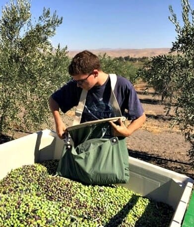 competitions-north-america-the-best-olive-oils-american-producers-win-record-number-of-awards-olive-oil-times