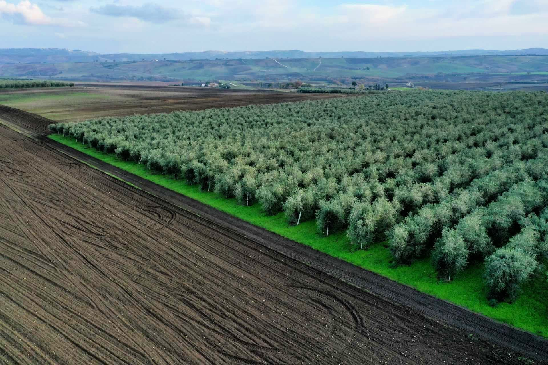 profiles-production-the-best-olive-oils-olive-oil-times