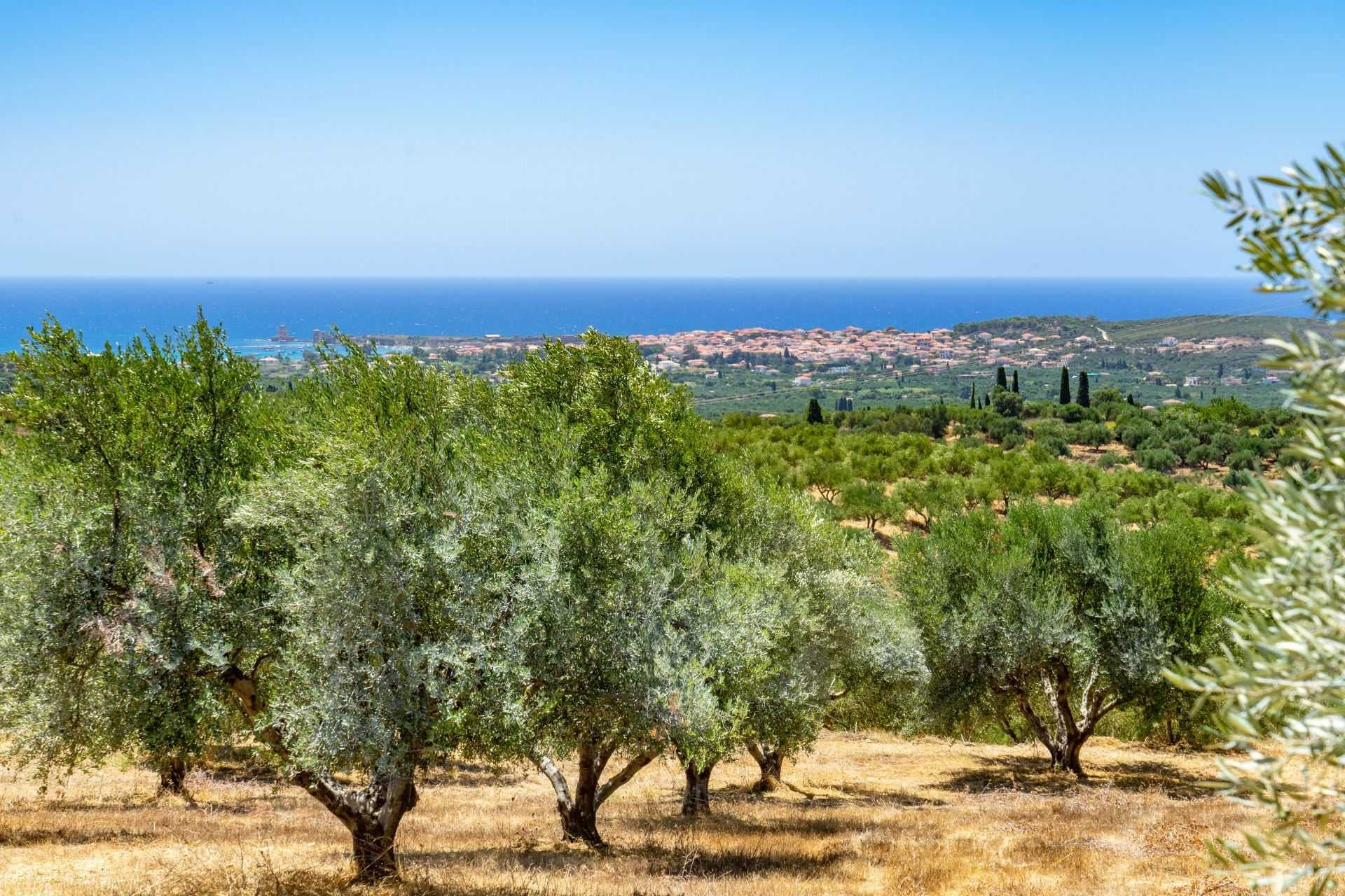 world-decorated-olive-oil-bottles-to-be-auctioned-as-crypto-assets-olive-oil-times