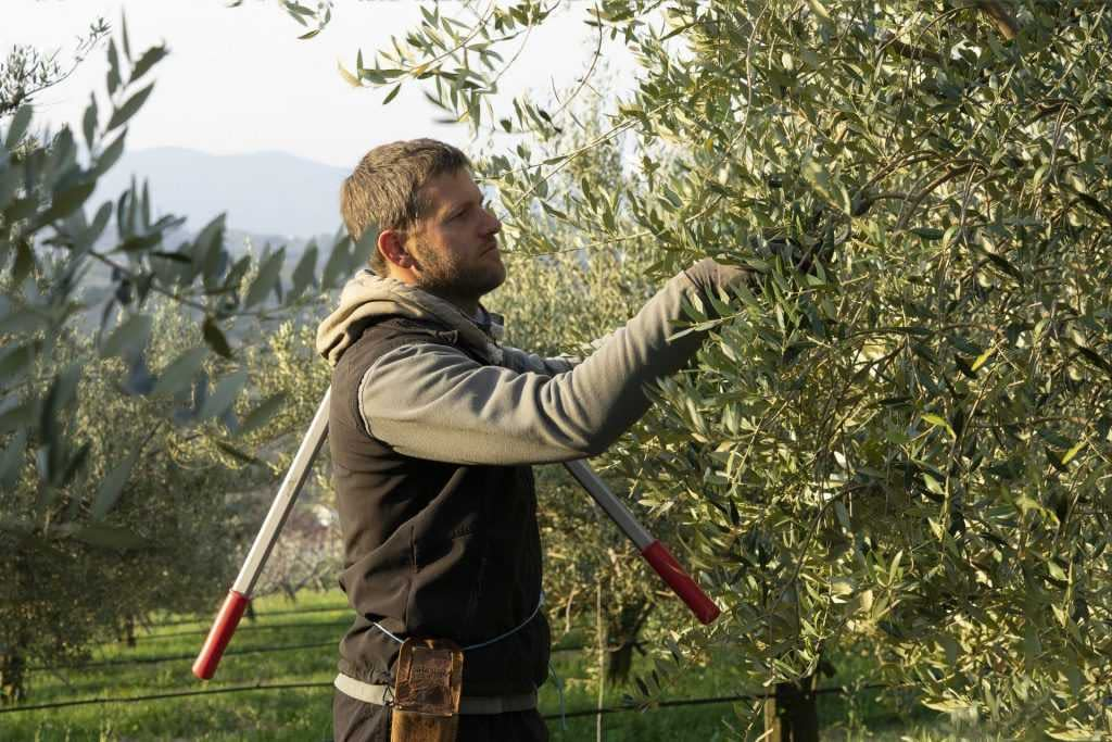 europe-competitions-the-best-olive-oils-fruitful-harvest-yields-record-year-for-slovenia-bosnia-and-herzegovina-olive-oil-times