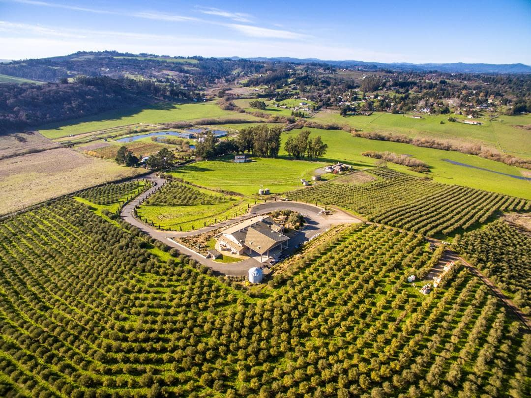 north-america-profiles-production-the-best-olive-oils-world-sustainable-organic-production-helps-one-california-producer-standout-olive-oil-times