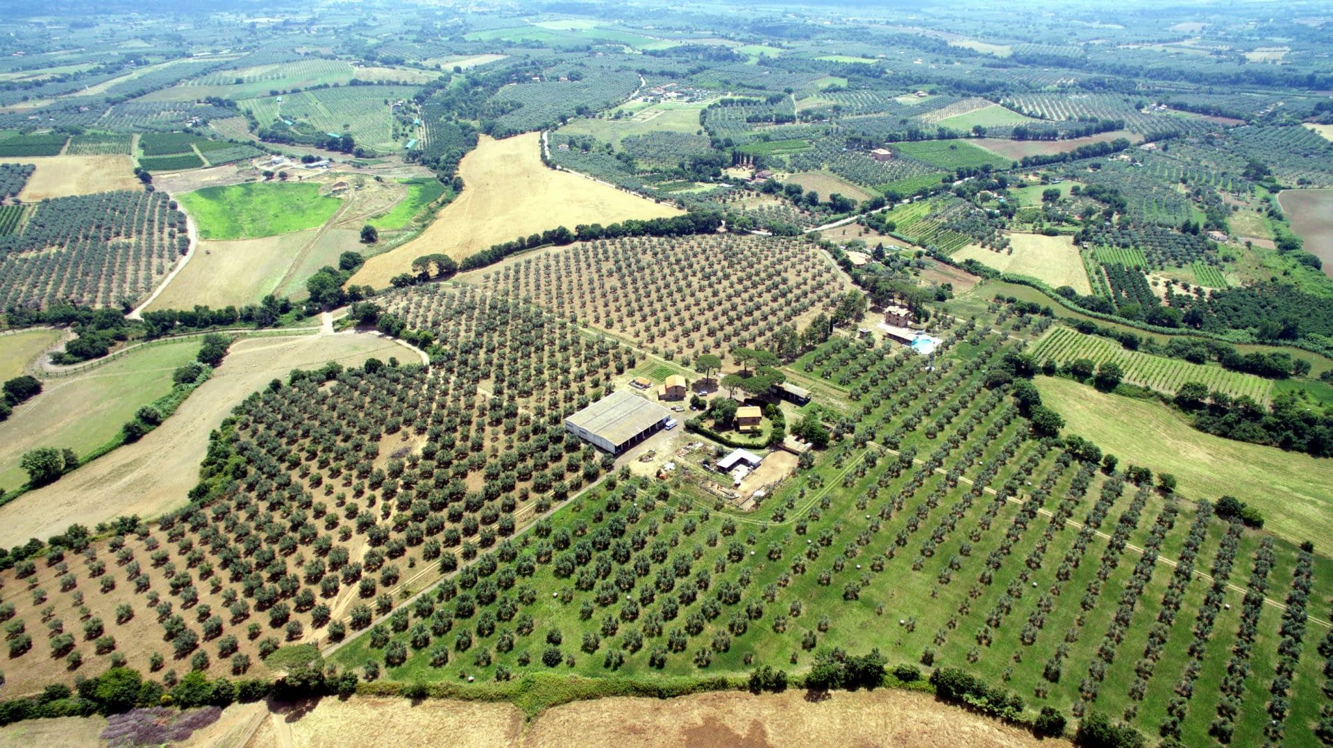 profiles-production-the-best-olive-oils-sustainable-tourism-and-highquality-production-at-traldi-farm-olive-oil-times