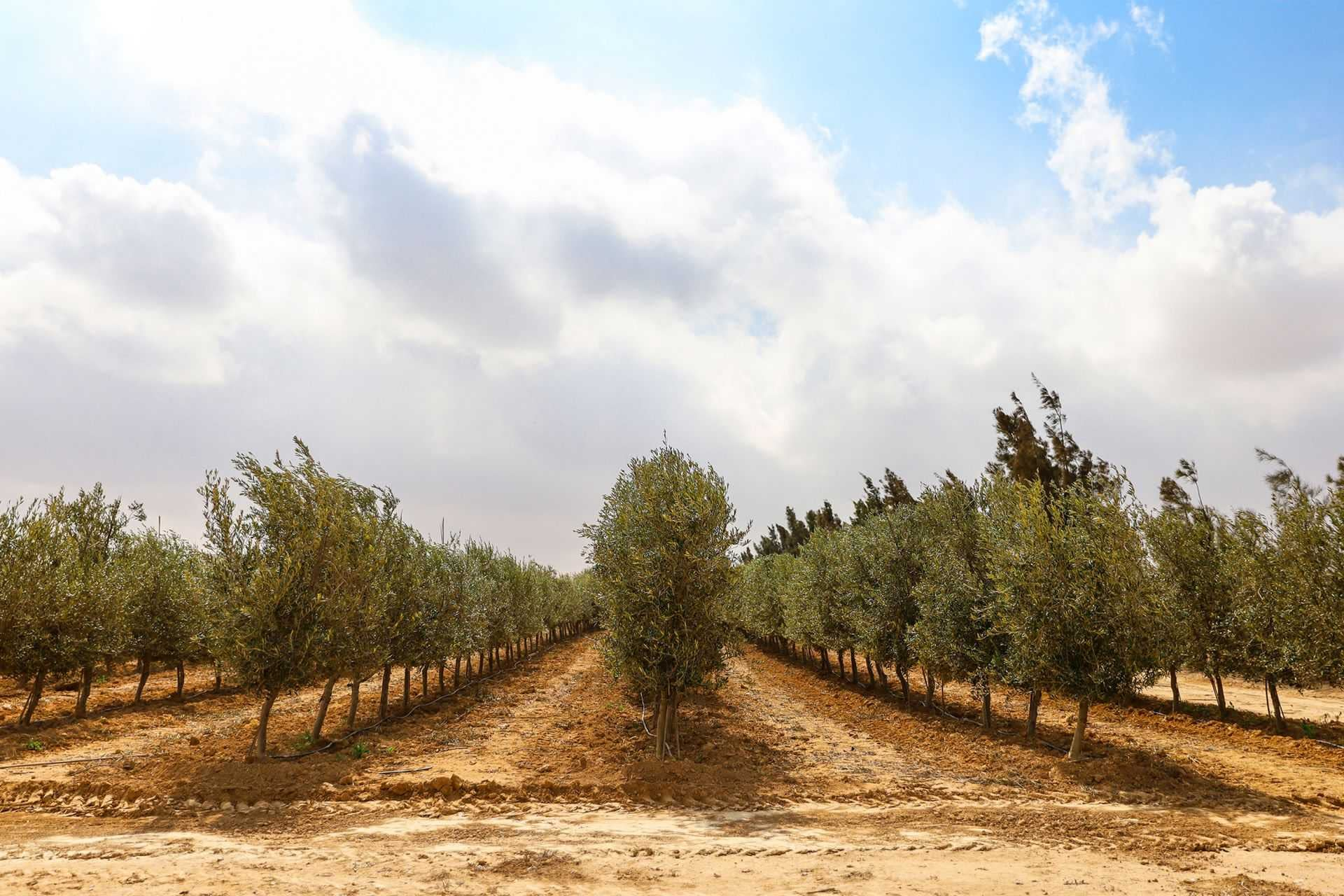 africa-middle-east-competitions-the-best-olive-oils-jordanian-producers-celebrate-firstever-wins-at-world-olive-oil-competition-olive-oil-times