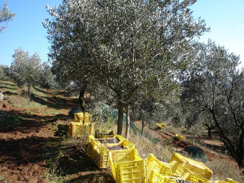 concorsi-europei-i-migliori-olii-produttori-del-sud-italia-goditi-un-altro-forte-mostra-al-concorso-mondiale-tempi