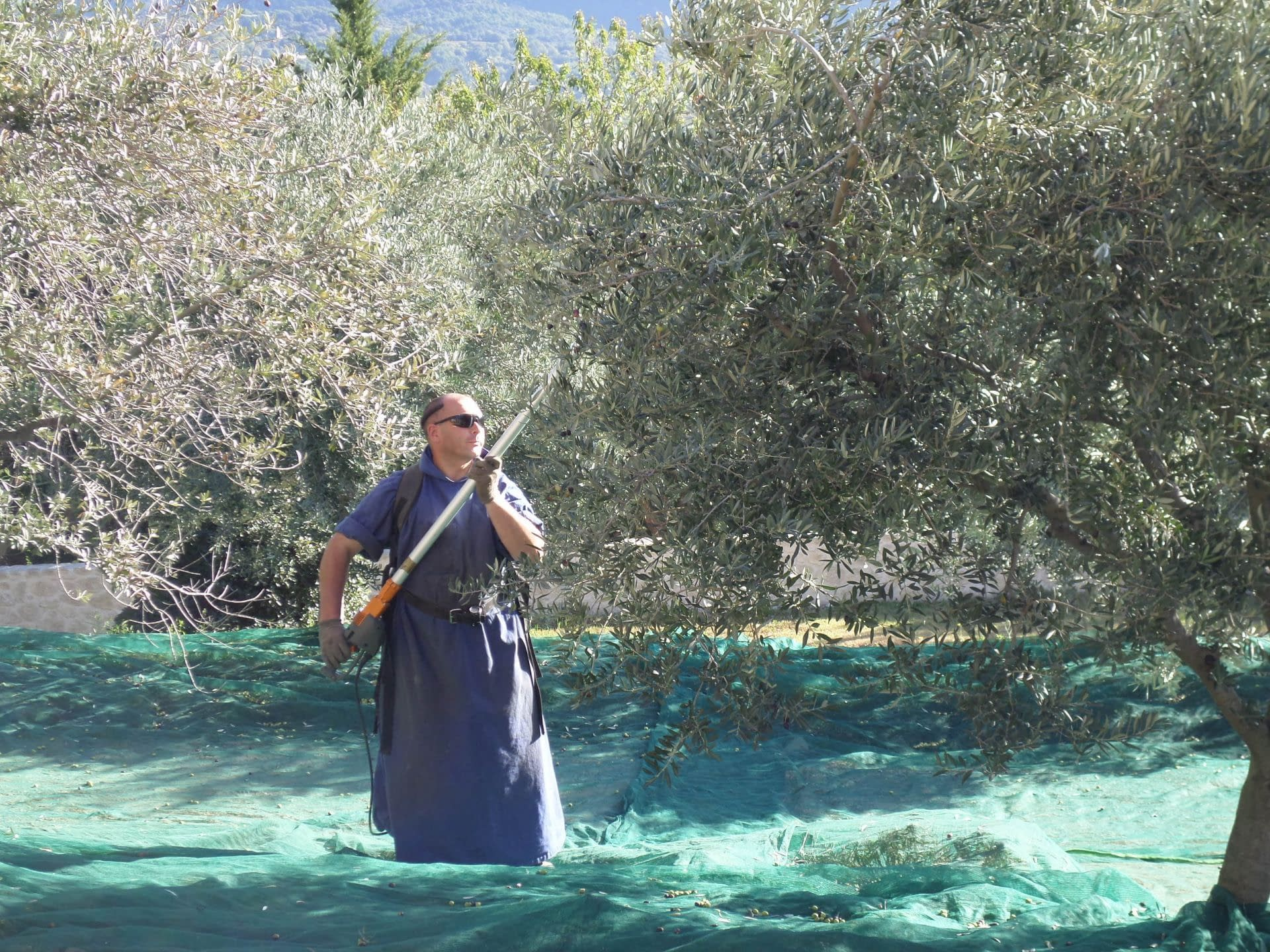 business-europe-production-producers-assess-damage-of-springtime-frost-across-southern-france-olive-oil-times