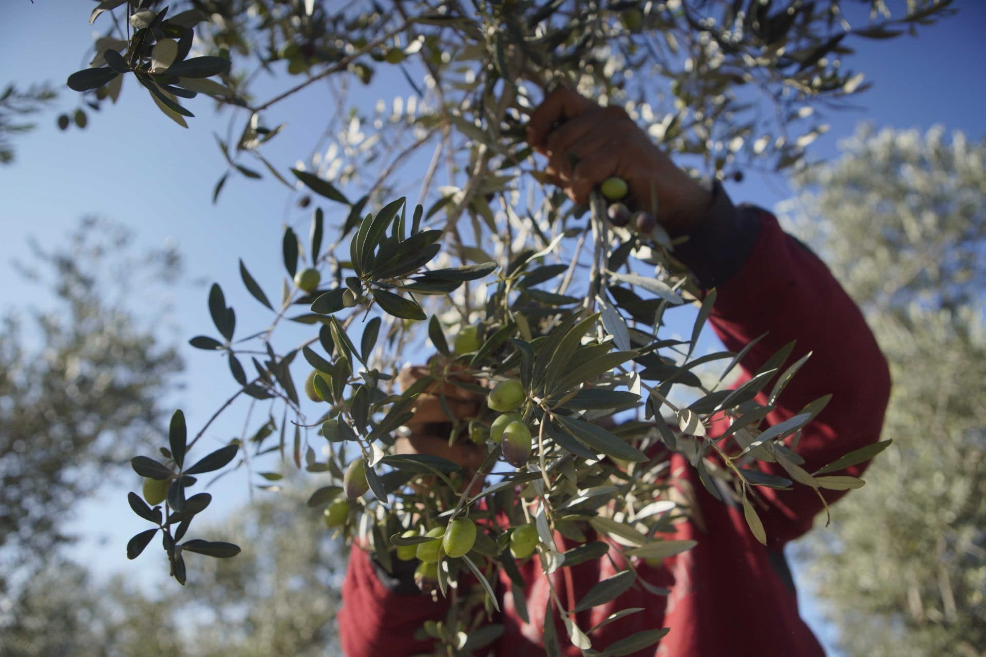 africa-middle-east-business-hardships-in-lebanon-shift-focus-to-exports-olive-oil-times