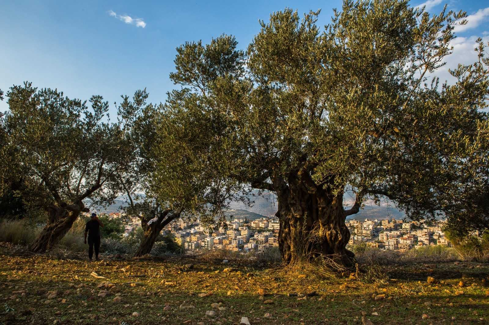 africa-middle-east-competitions-profiles-the-best-olive-oils-israeli-producers-celebrate-record-year-at-world-competition-olive-oil-times