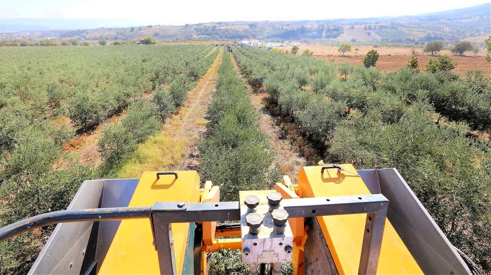africa-middle-east-competitions-profiles-the-best-olive-oils-turkish-olive-oils-win-acclaim-in-world-competition-olive-oil-times