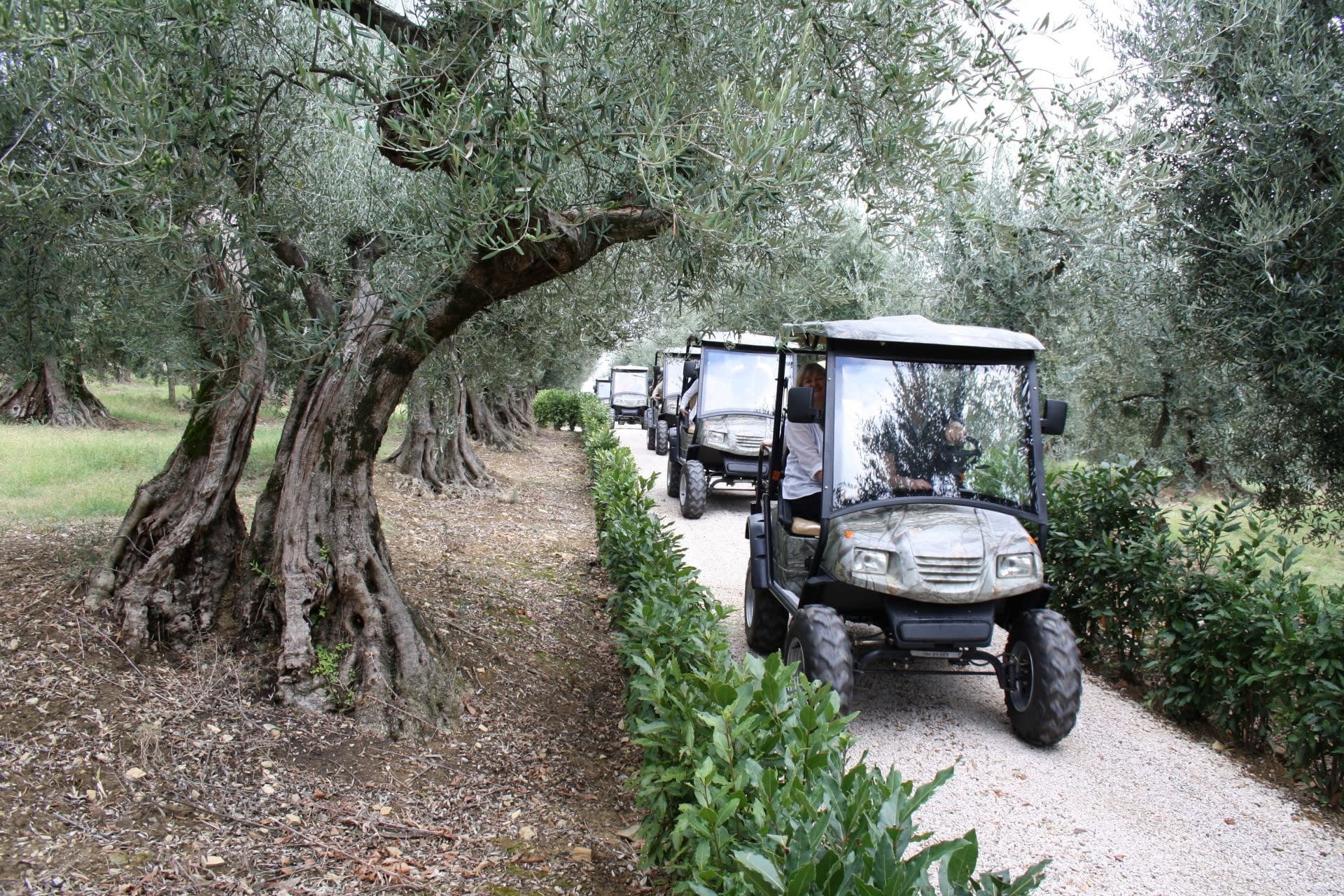 profiles-production-history-and-innovation-guide-an-awardwinning-producer-in-umbria-olive-oil-times