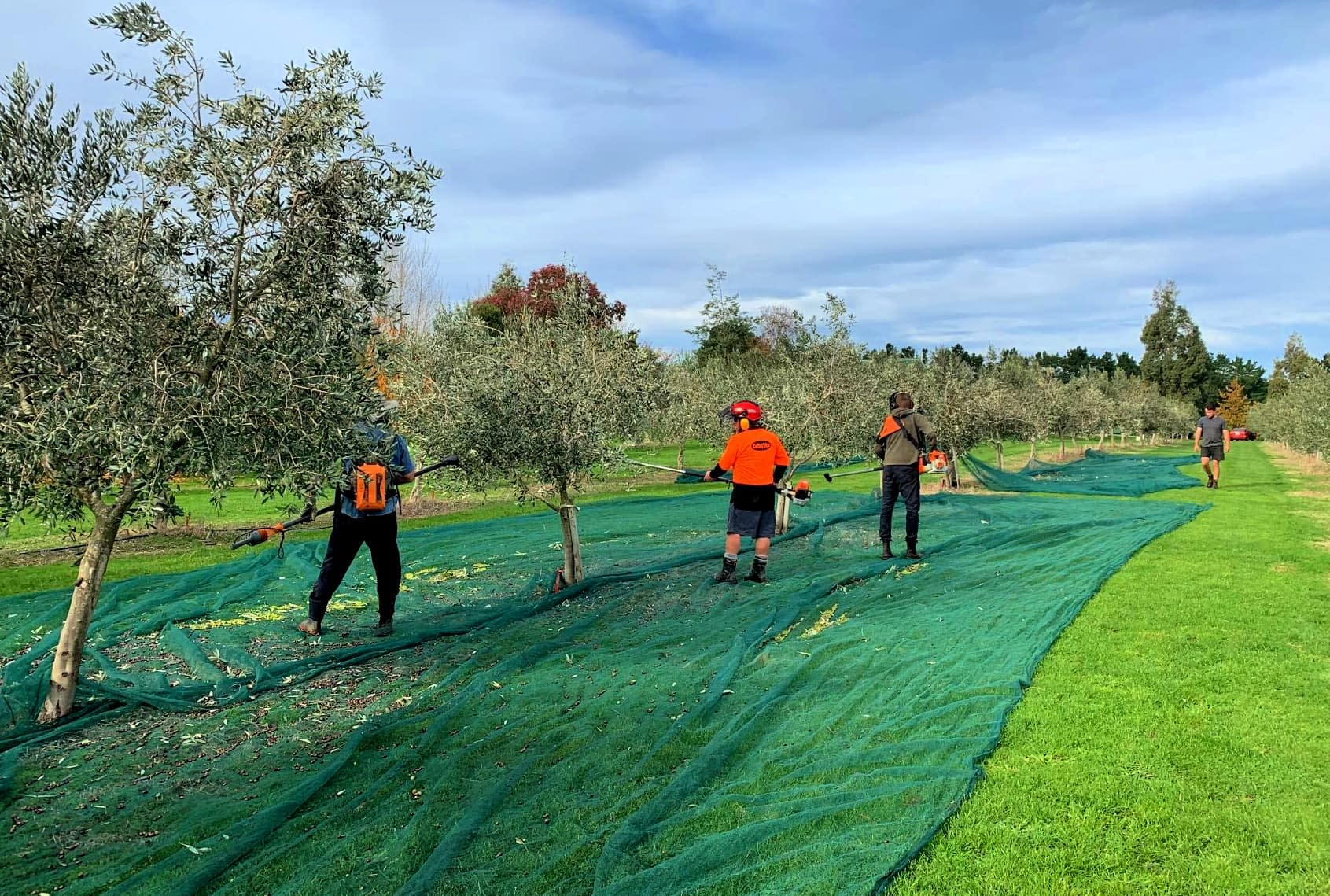 australia-and-new-zealand-competitions-the-best-olive-oils-despite-covid-and-drought-australian-and-new-zealand-producers-shine-at-nyiooc-olive-oil-times