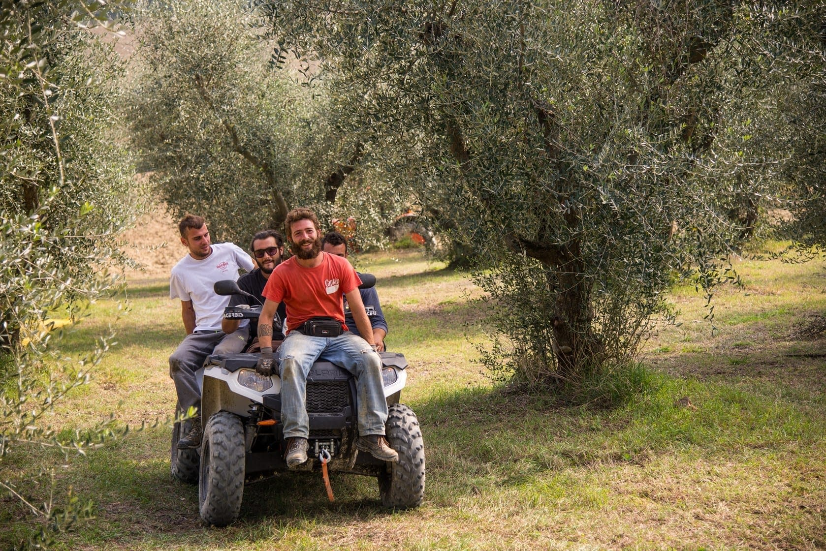 production-the-best-olive-oils-harvest-in-full-swing-at-italys-awardwinning-farms-olive-oil-times