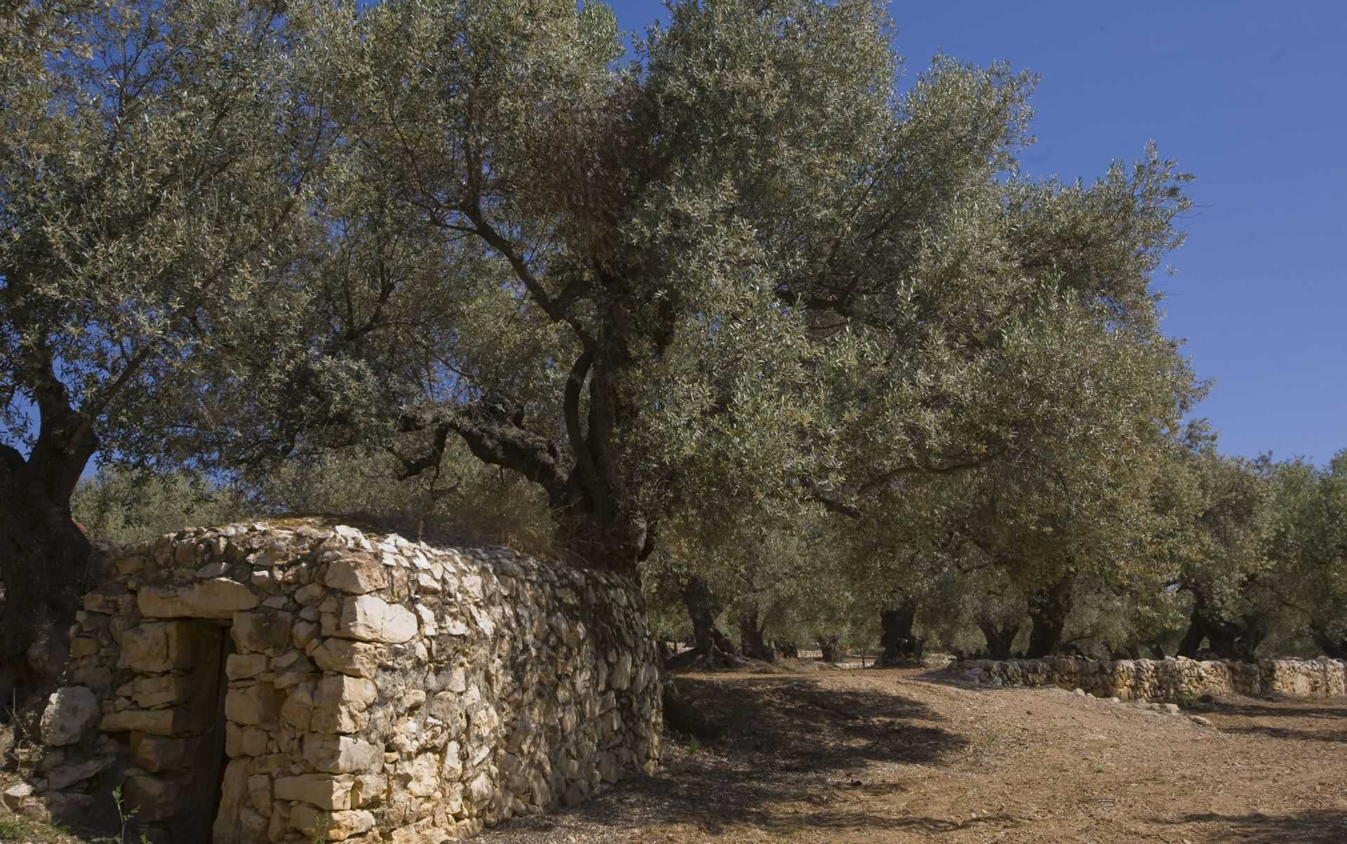 europe-competitions-the-best-olive-oils-producers-across-spain-celebrate-nyiooc-success-olive-oil-times