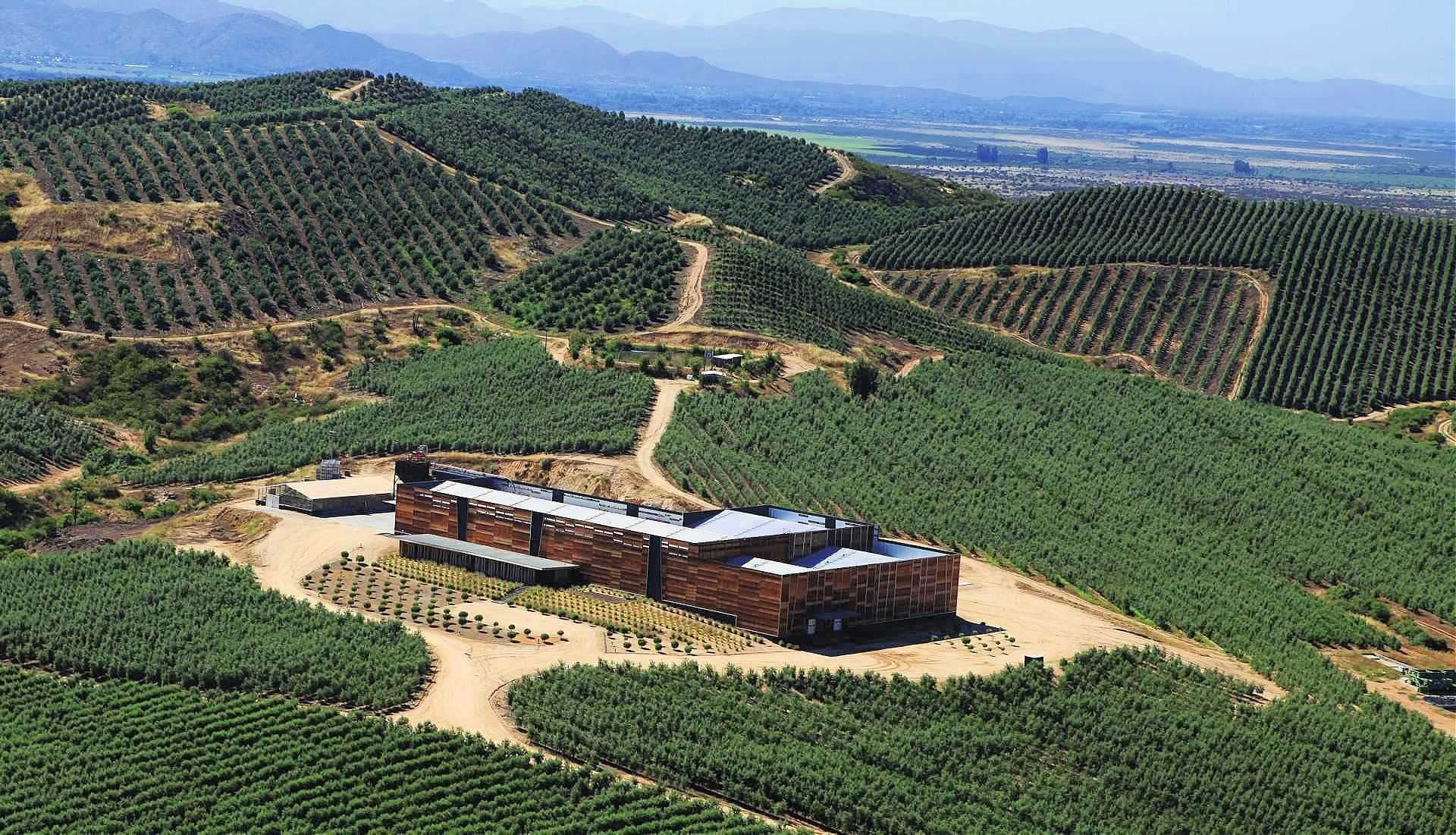 business-production-south-america-chilean-producers-manage-a-hard-year-to-a-promising-harvest-olive-oil-times