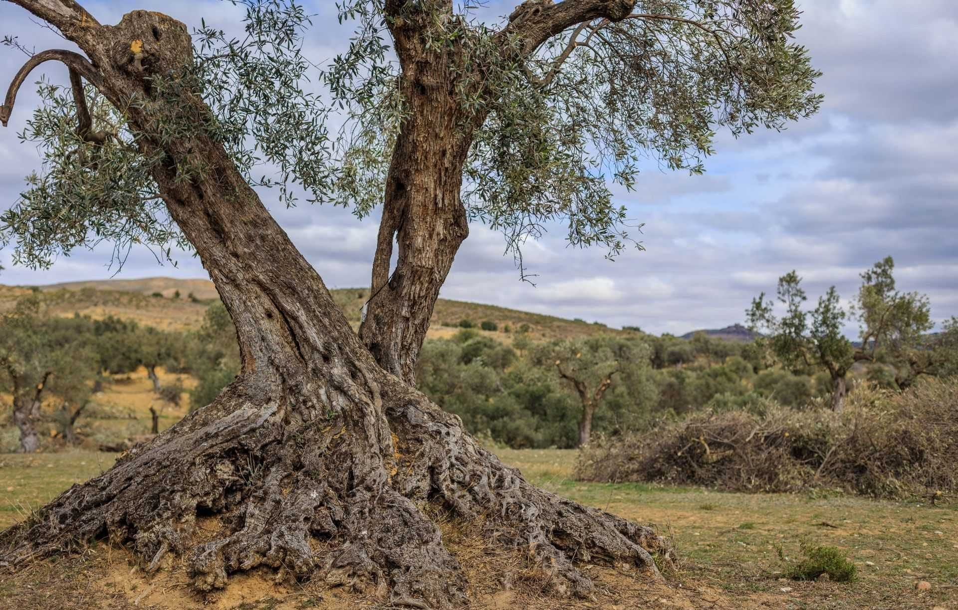 business-europe-production-world-olive-oil-times