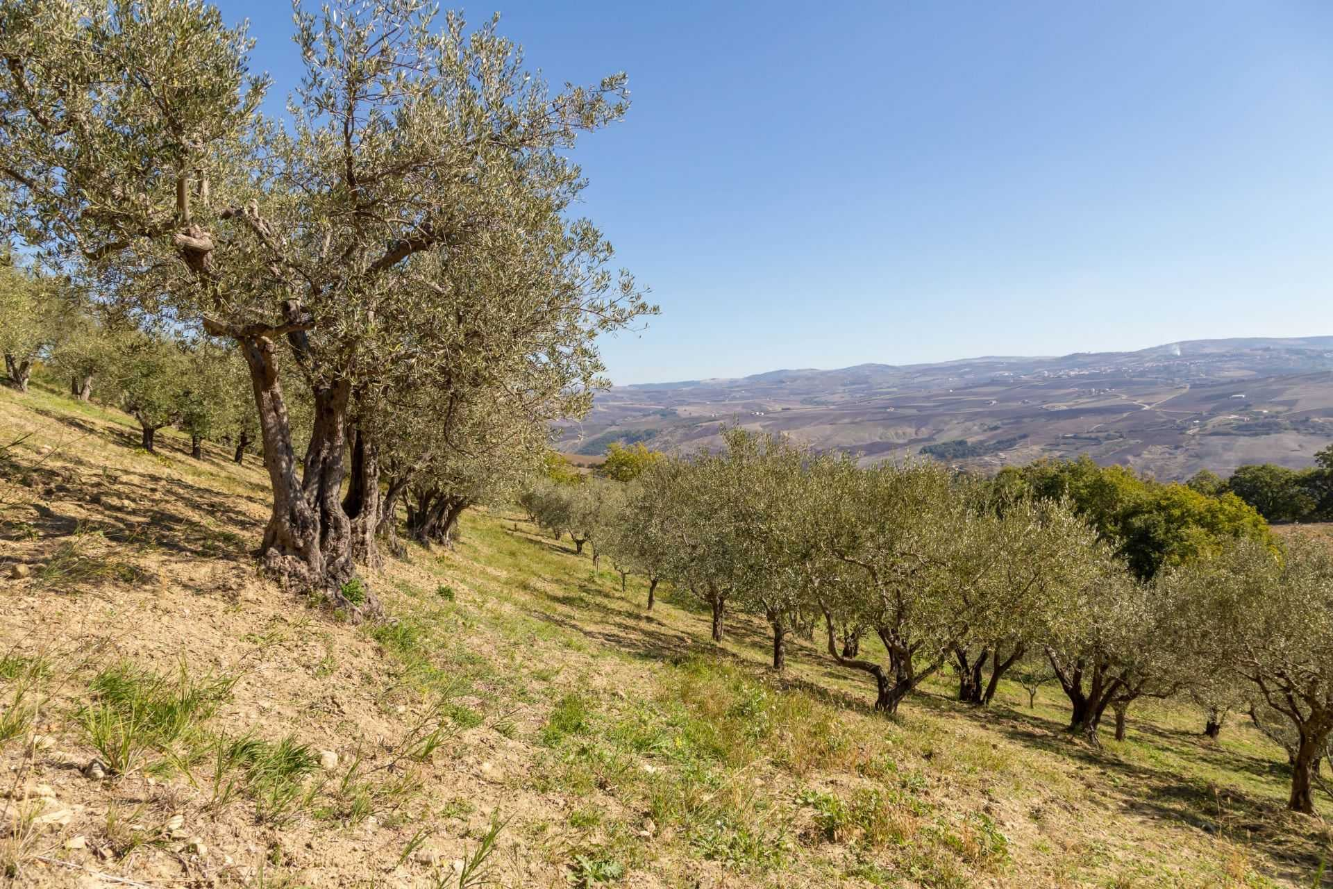 europe-competitions-the-best-olive-oils-southern-italian-producers-enjoy-another-strong-showing-at-world-competition-olive-oil-times