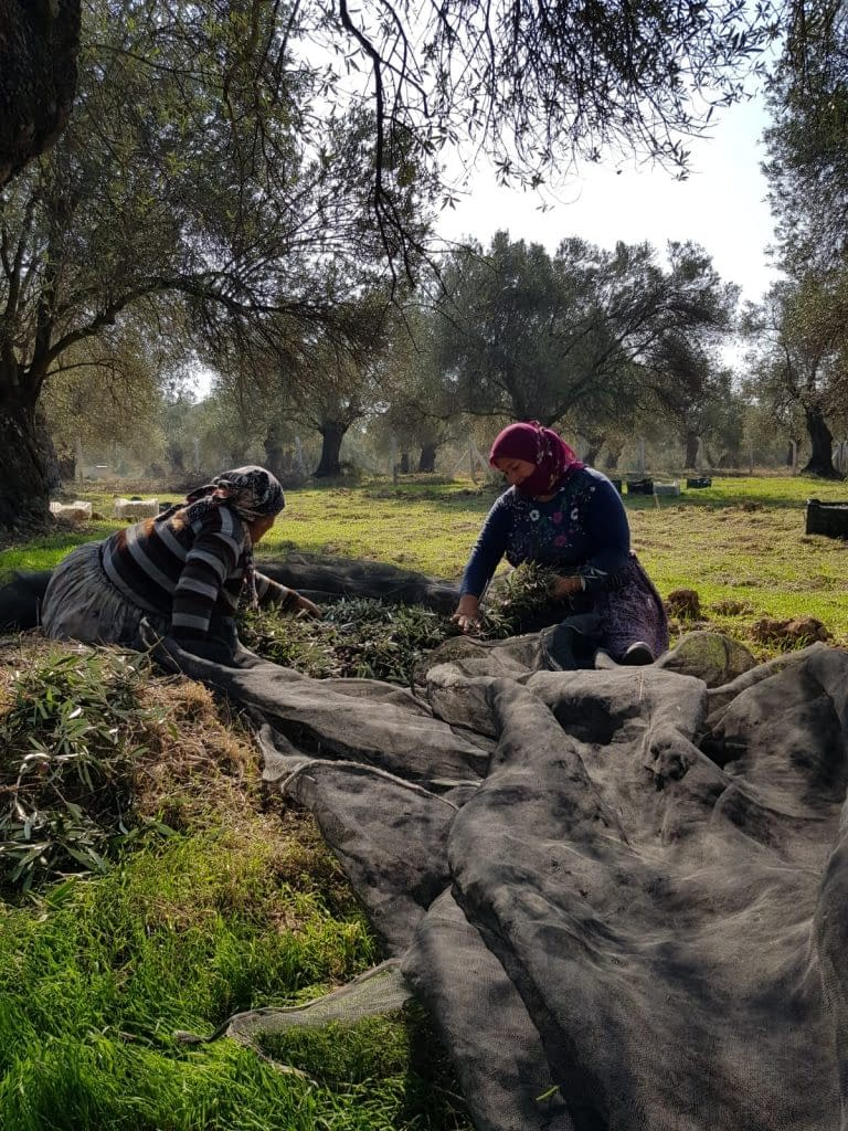africa-middle-east-business-briefs-tunisia-works-with-producers-to-add-value-to-branded-exports-olive-oil-times