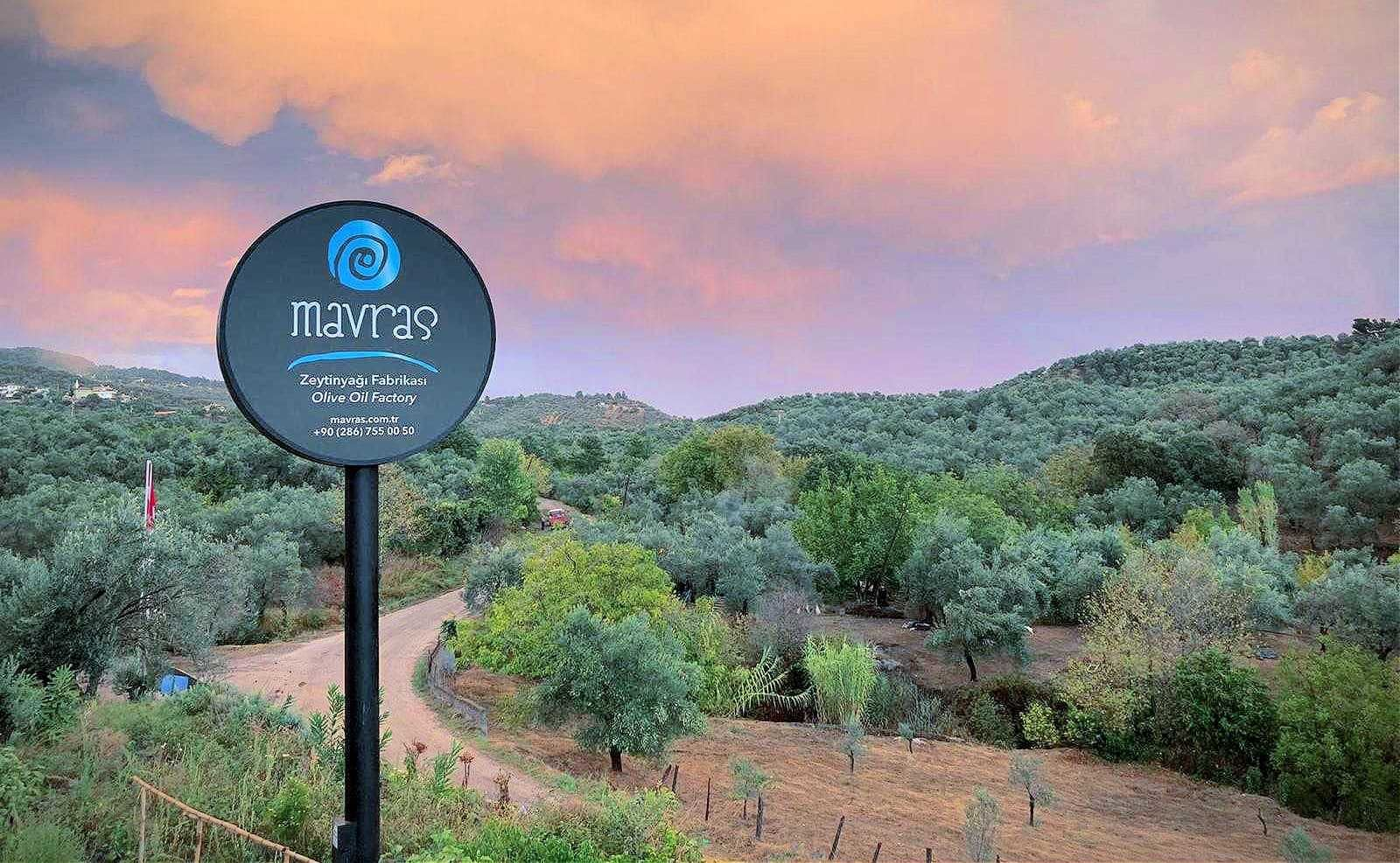 africa-middle-east-profiles-production-mavras-olive-oil-company-relies-on-tradition-terroir-to-produce-quality-evoo-olive-oil-times