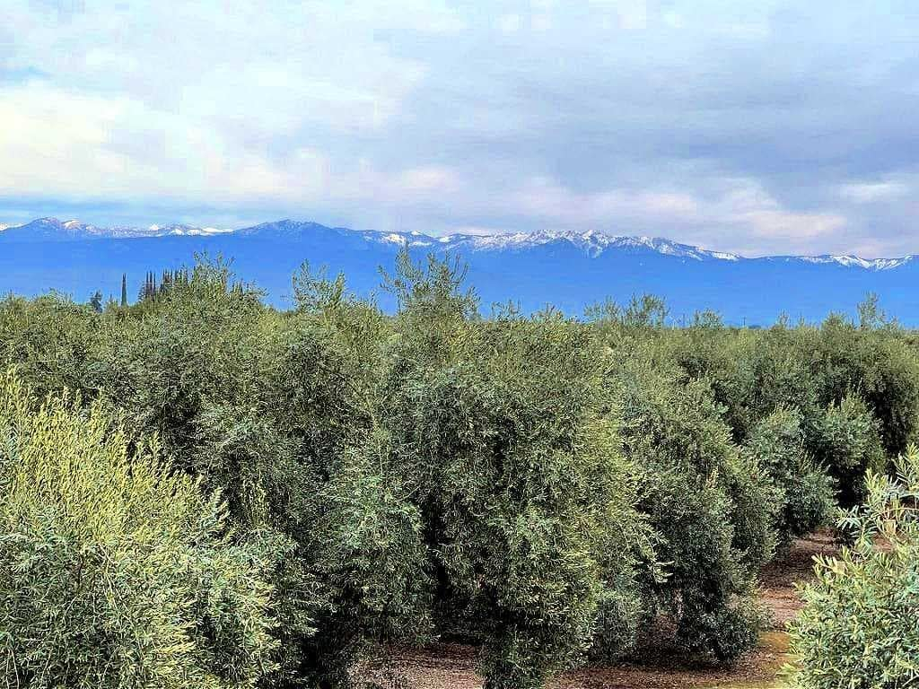 competitions-north-america-the-best-olive-oils-olive-oil-times