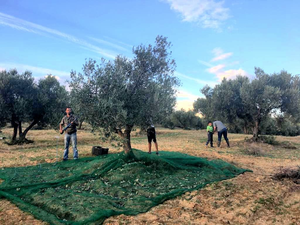 africa-middle-east-competitions-the-best-olive-oils-after-poor-harvest-a-record-year-for-tunisia-at-world-olive-oil-competition-olive-oil-times
