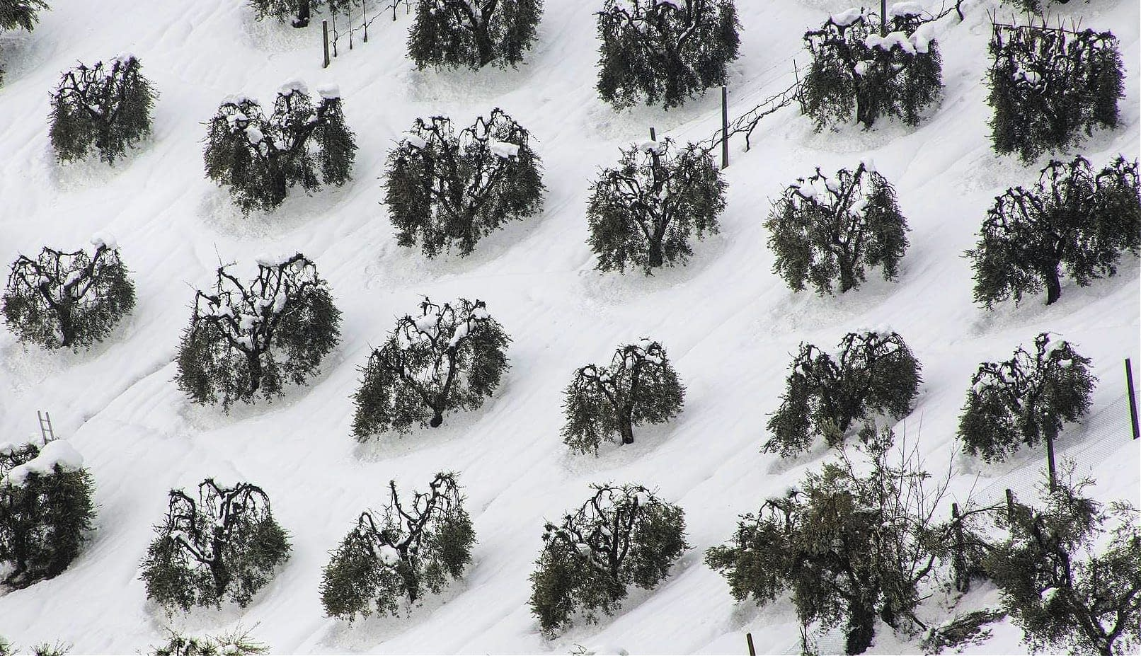 business-europe-italy-approves-aid-for-mills-hit-by-2018-snow-storm-olive-oil-times