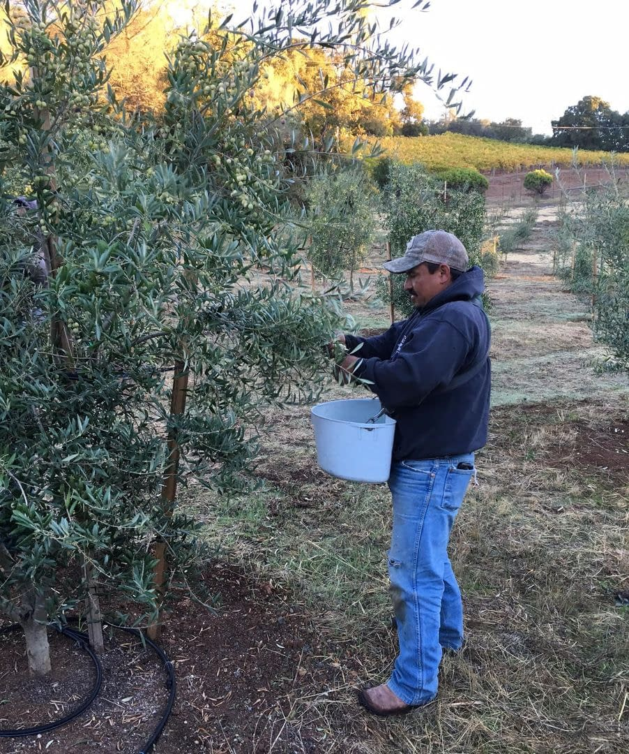 profiles-production-california-farmer-learns-to-adapt-to-constant-change-olive-oil-times
