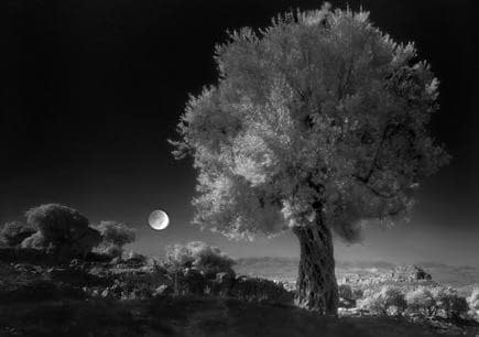 production-world-harvesting-under-the-moon-olive-oil-times-night-harvest