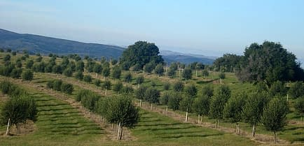 south-america-uruguayan-olive-oil-production-expected-to-grow-olive-oil-times-the-groves-of-uruguayan-olive-oil-producer-finca-babieca