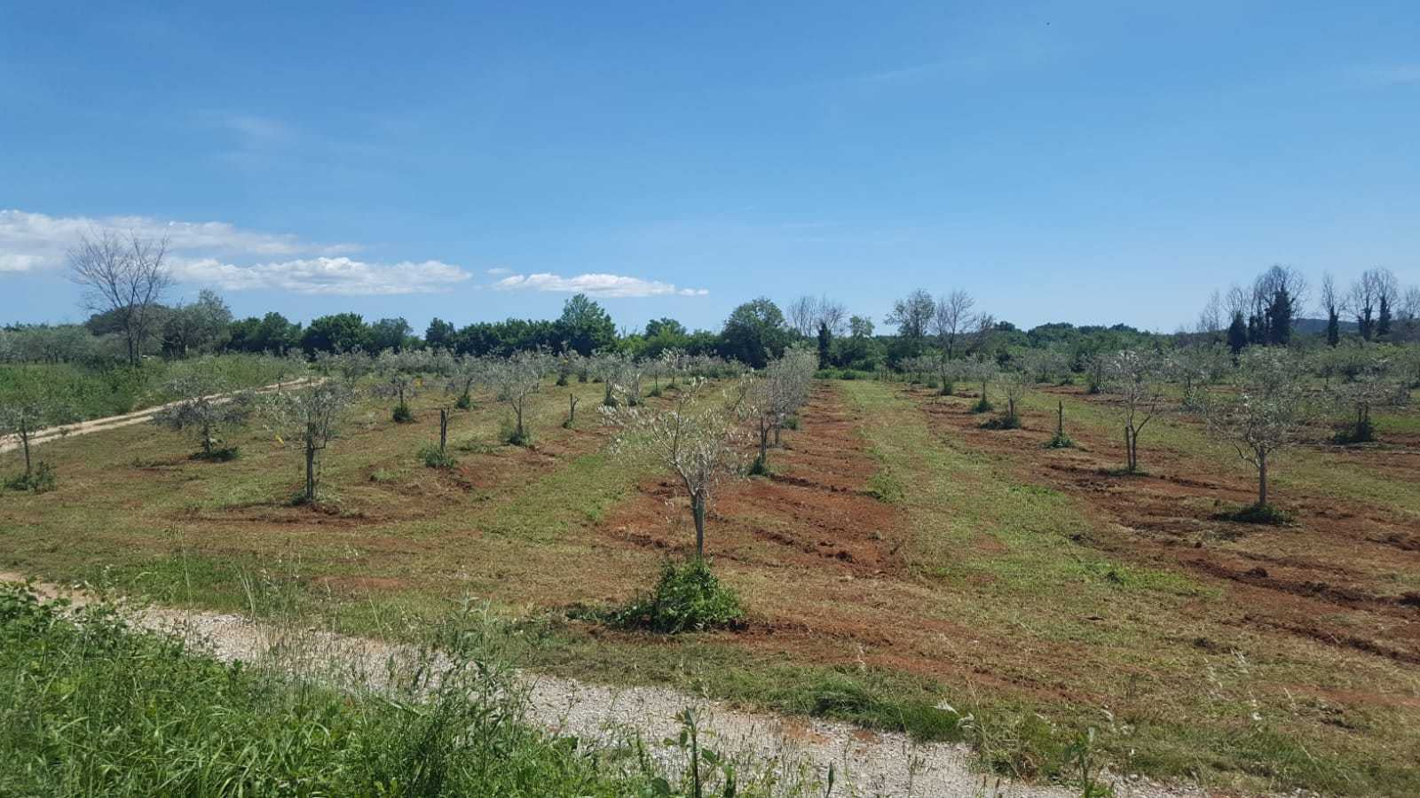 business-europe-profiles-production-awardwinning-farm-in-croatia-grows-its-brand-in-the-austrian-market-olive-oil-times
