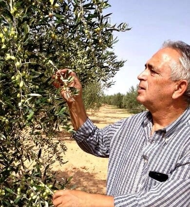 business-competitions-production-the-best-olive-oils-world-a-record-number-of-awards-for-tunisian-olive-oil-olive-oil-times