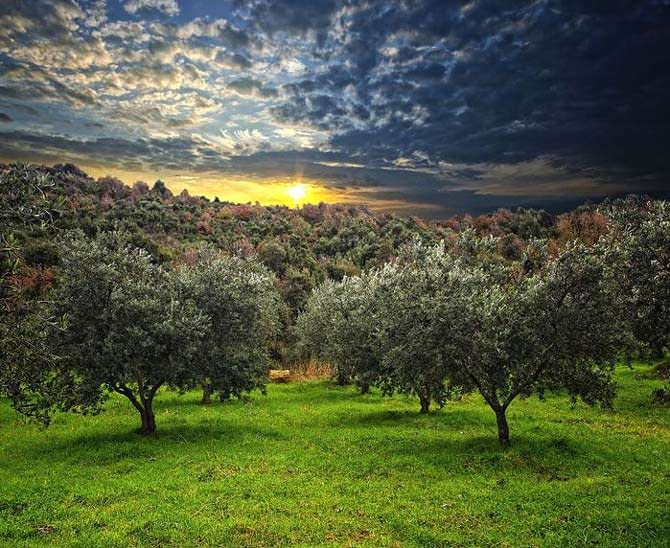 production-world-french-growers-encouraged-to-go-organic-olive-oil-times-french-growers-encouraged-to-go-organic