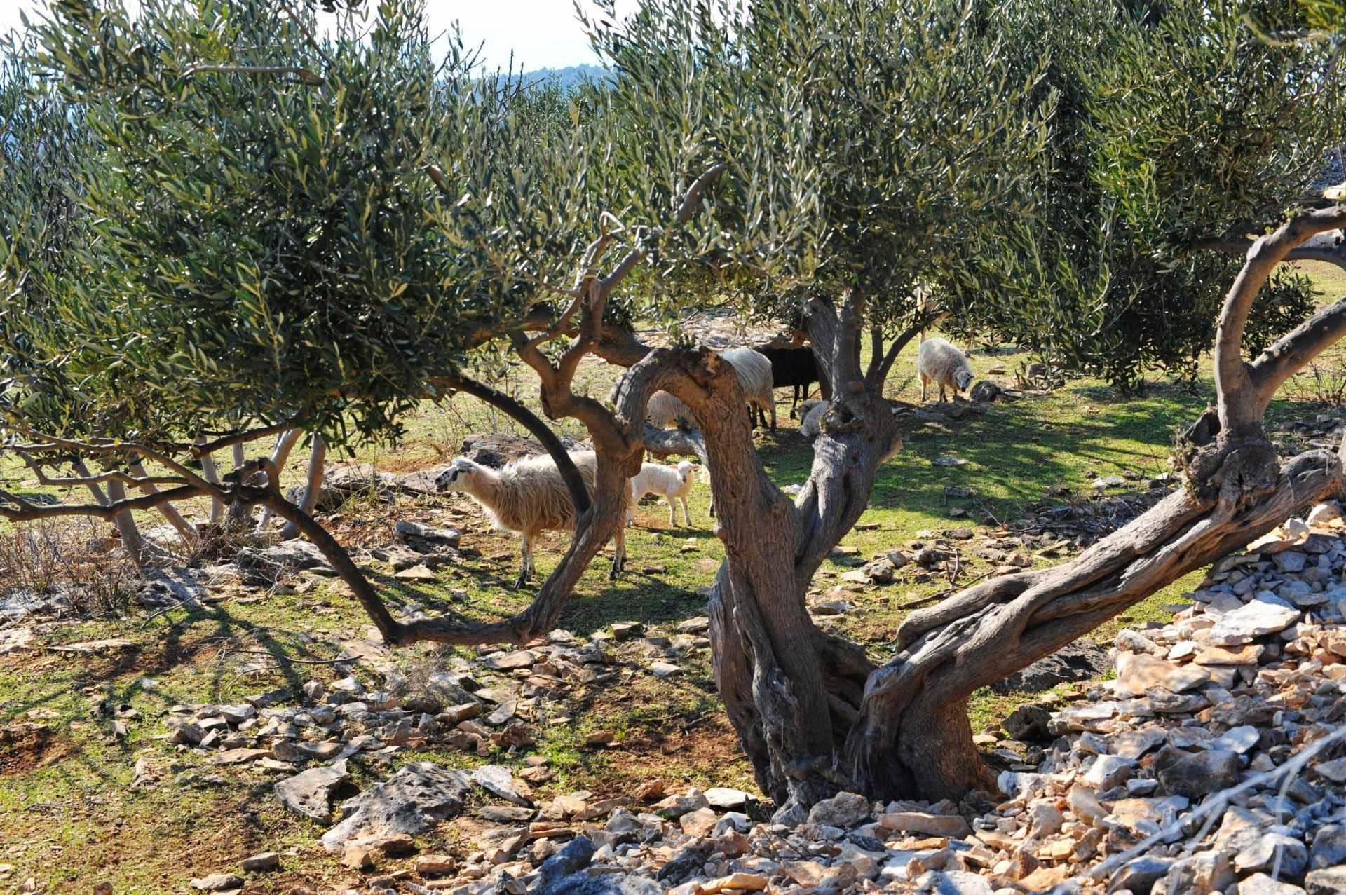 business-europe-production-olive-oil-times
