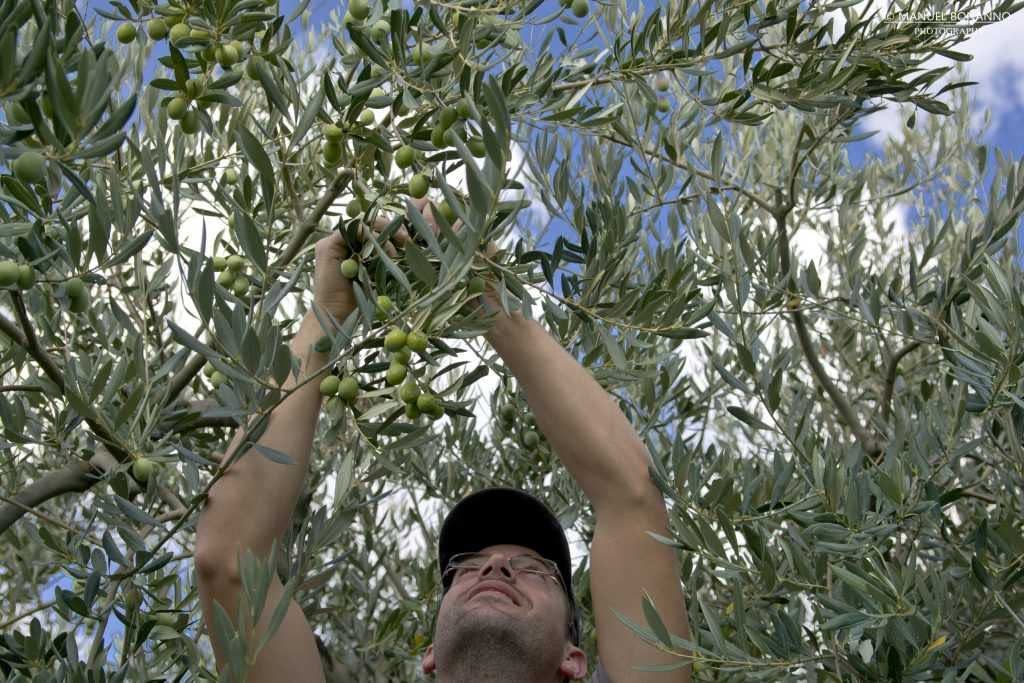 europe-competitions-the-best-olive-oils-producers-on-sicily-and-sardinia-prevail-in-world-competition-olive-oil-times