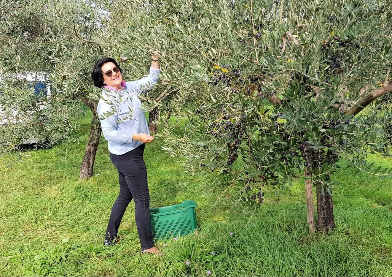 europe-competitions-the-best-olive-oils-croatian-producers-celebrate-87-wins-at-world-competition-olive-oil-times
