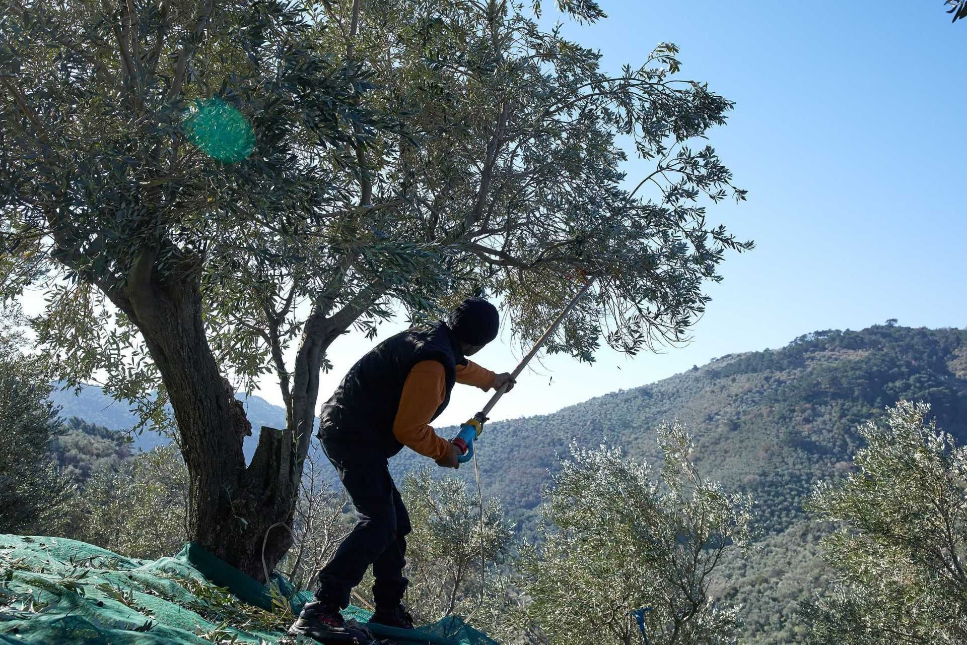 europe-competitions-the-best-olive-oils-producers-across-greece-continue-to-celebrate-nyiooc-triumphs-olive-oil-times